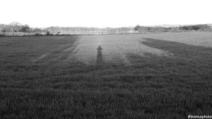 Caminando por los campos de Albeta